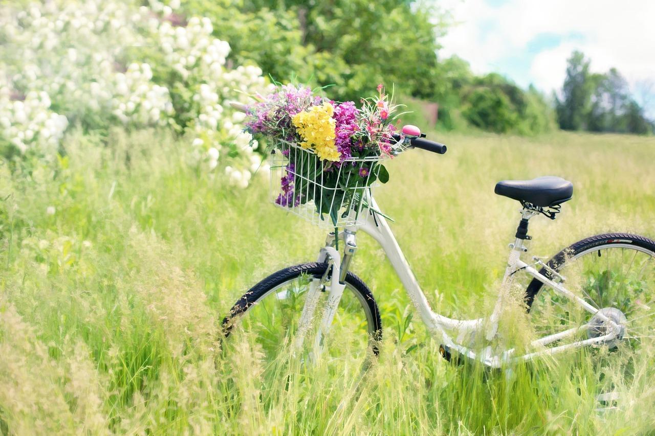 Ferienprogramm 2016_Fisch_Fahrrad